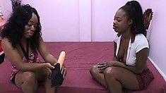 Chubby black bitch convinces her sistah to go down on her cunt